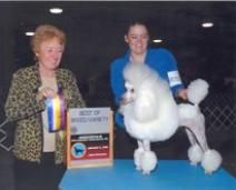 Champion Miniature Poodle